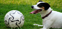Imagen: http://thedoggyworld.com/news/soccer-dogs-and-the-world-cup/